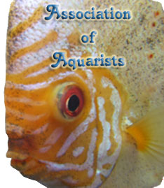 Association of Aquarists box banner